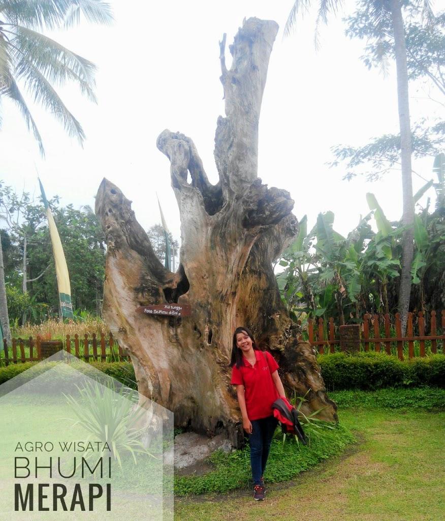 Kegiatan Apa Saja yang ada di Bhumi Merapi?